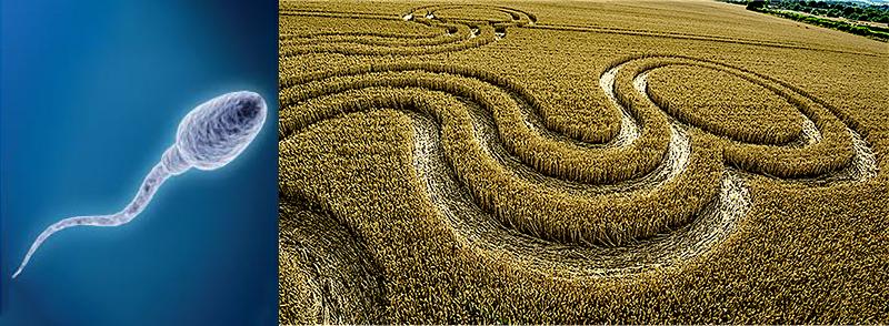 11 Spermatozoo Particolare Crop OV web
